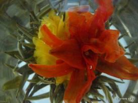 Precious Blossom