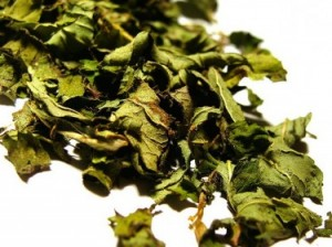 Loose-peppermint-leaf-375x281